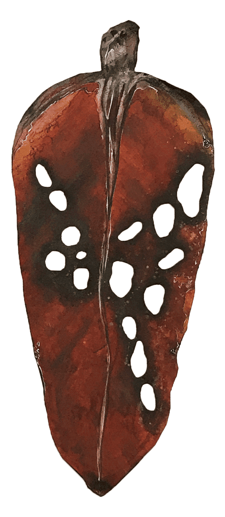 NZ Art Pohutukawa Leaf - Large 2 by Liz McAuliffe