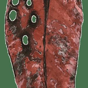 NZ Art Pohutukawa Leaf - Large 4 by Liz McAuliffe