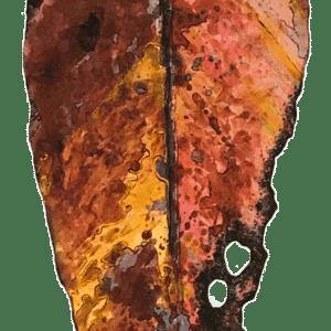 NZ Art Pohutukawa Leaf - Large 5 by Liz McAuliffe