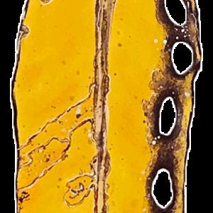 NZ ArtPohutukawa - Medium - Y6