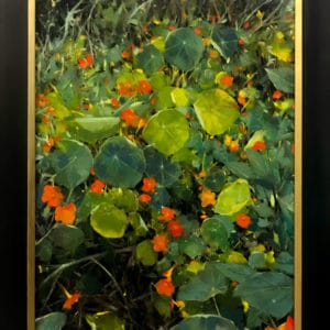 Nature Art for Sale - Mobile Art Gallery