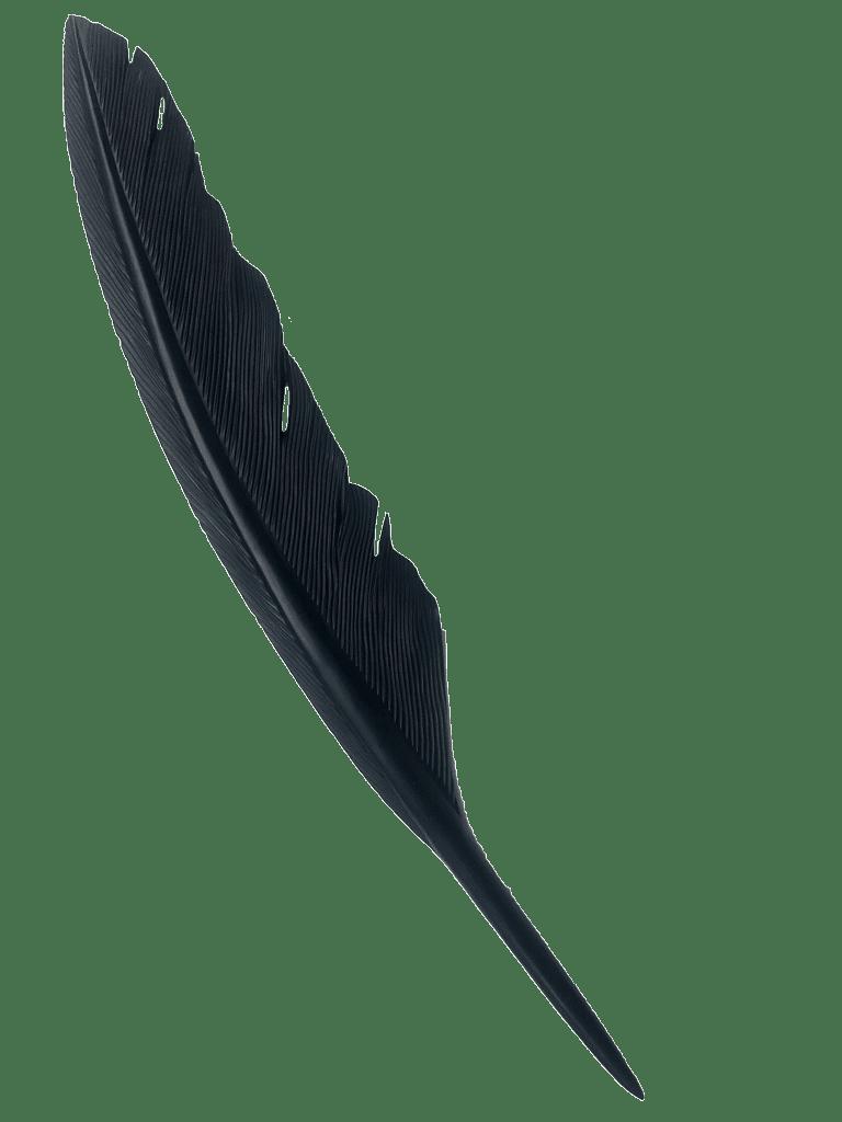 Tui-Kauri
