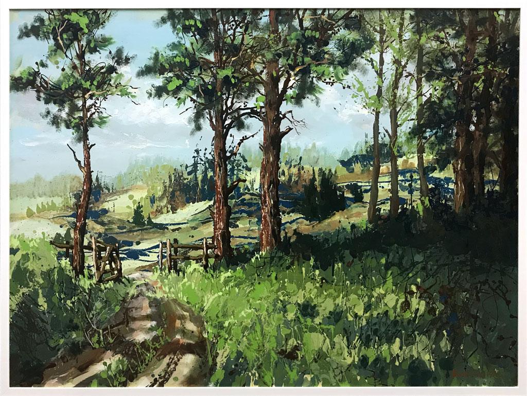 Pine-Forest,-Rotorua