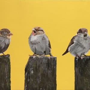 Sparrows - Yellow Dawn by Clive Jepson