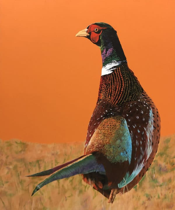 Bird art - Ring-Necked Pheasant by Clive Jepson