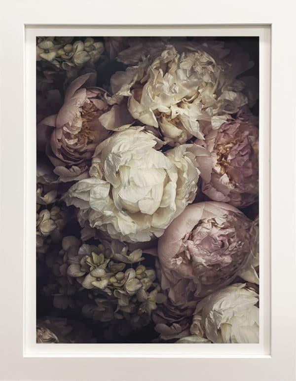 Botanical photograph - Manon by Marina de Wit